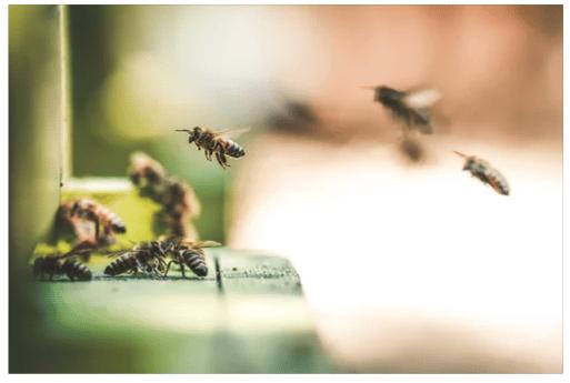bees siding